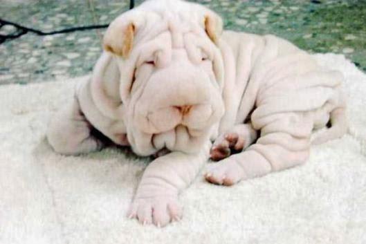 هل هي منشفة ؟ اغرب انواع الكلاب !