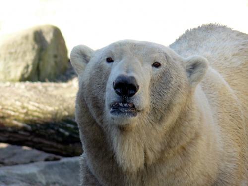 Morton\'s Musings: Scary bear