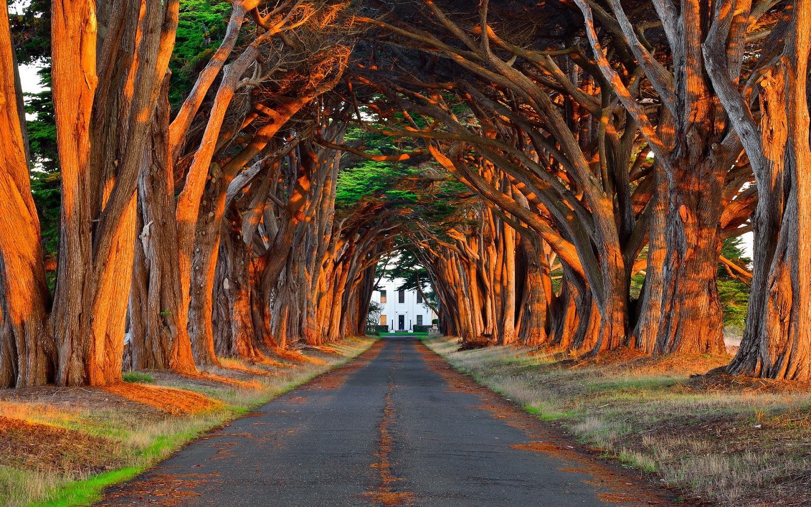 Fondo de pantalla paisaje carretera cubierta de arboles for Fondos de pantalla espectaculares
