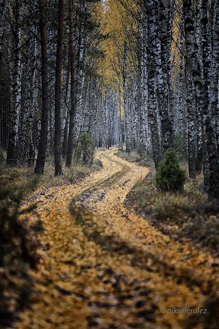 Bory Tucholskie, Tuchola Forest, Krajobraz, Landscapes, jesień, Autumn, colours, kolory, Polska, Poland, Agata Raszke