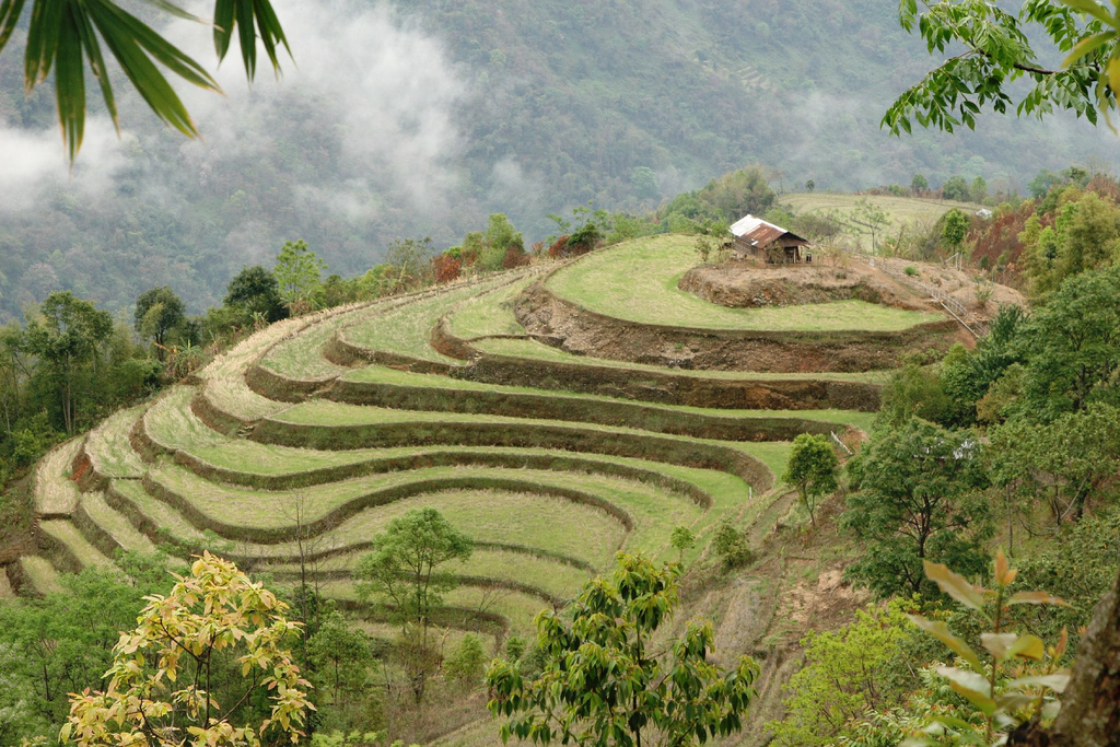 Tezpur india tourism for Terrace farming meaning