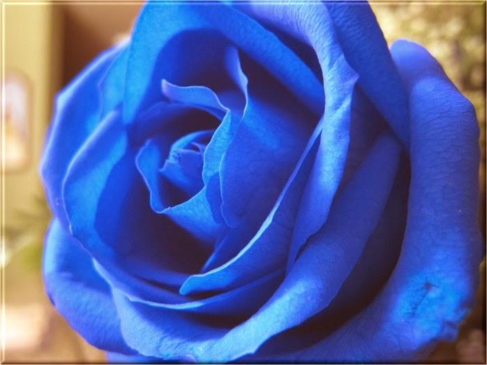 arti mawar biru