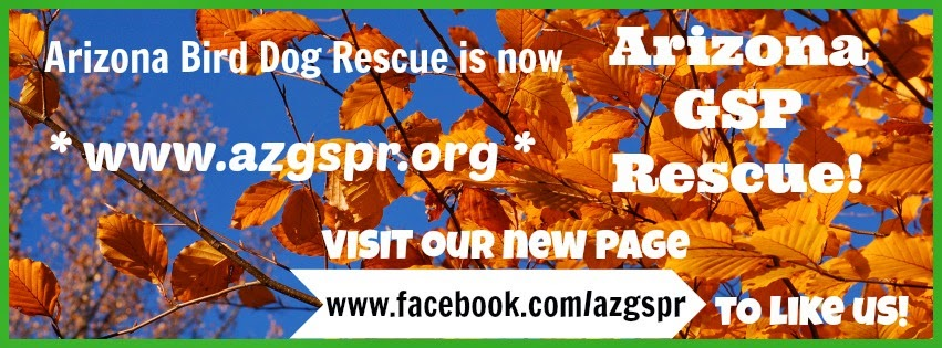 Arizona Bird Dog Rescue