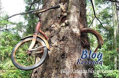 Basikal ditelan pokok