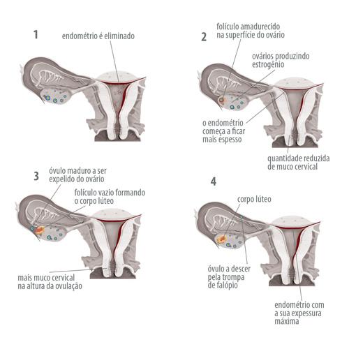 lægehjælp menstruation i 2 dage gravid