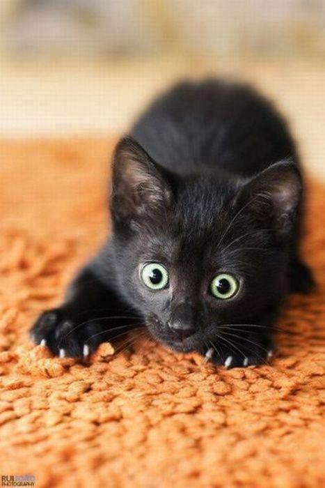 cute black cats with green eyes pattazhy