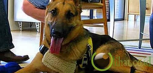 Seekor anjing yang menyelamatkan pemiliknya dengan menelpon 911