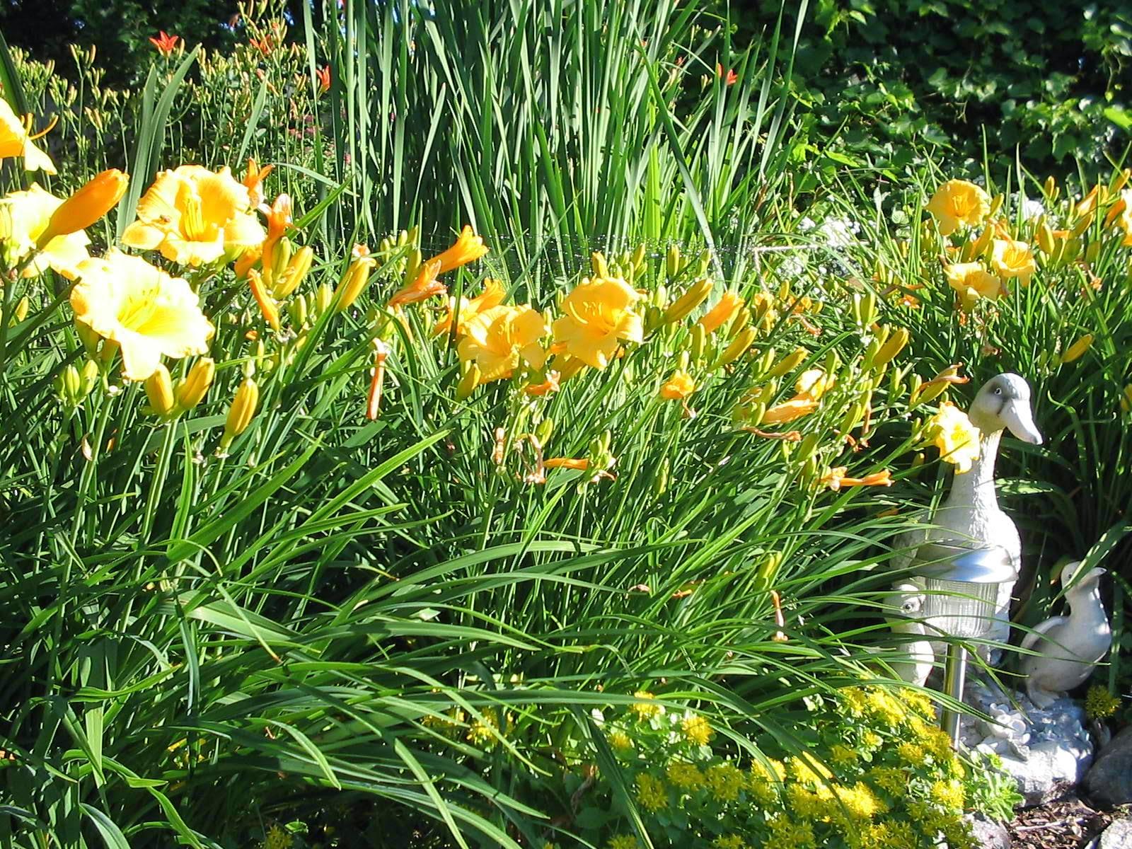 Garden Plants Nursery Blog Best Plants For Not So Demanding