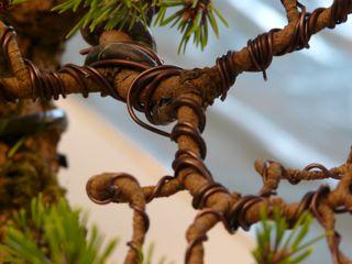 Peachy Ornamental Plant Training Your Bonsai Tree How To Wiring 101 Ivorowellnesstrialsorg
