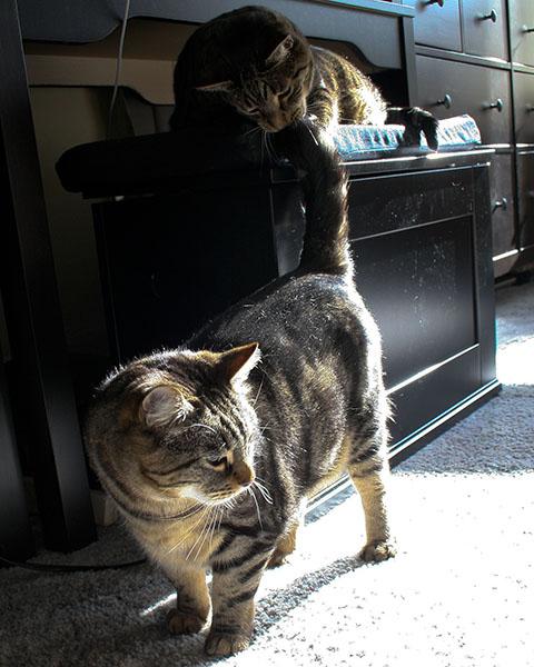 фото коты