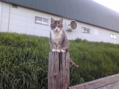farm cat sitting on post