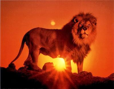 leao-africano