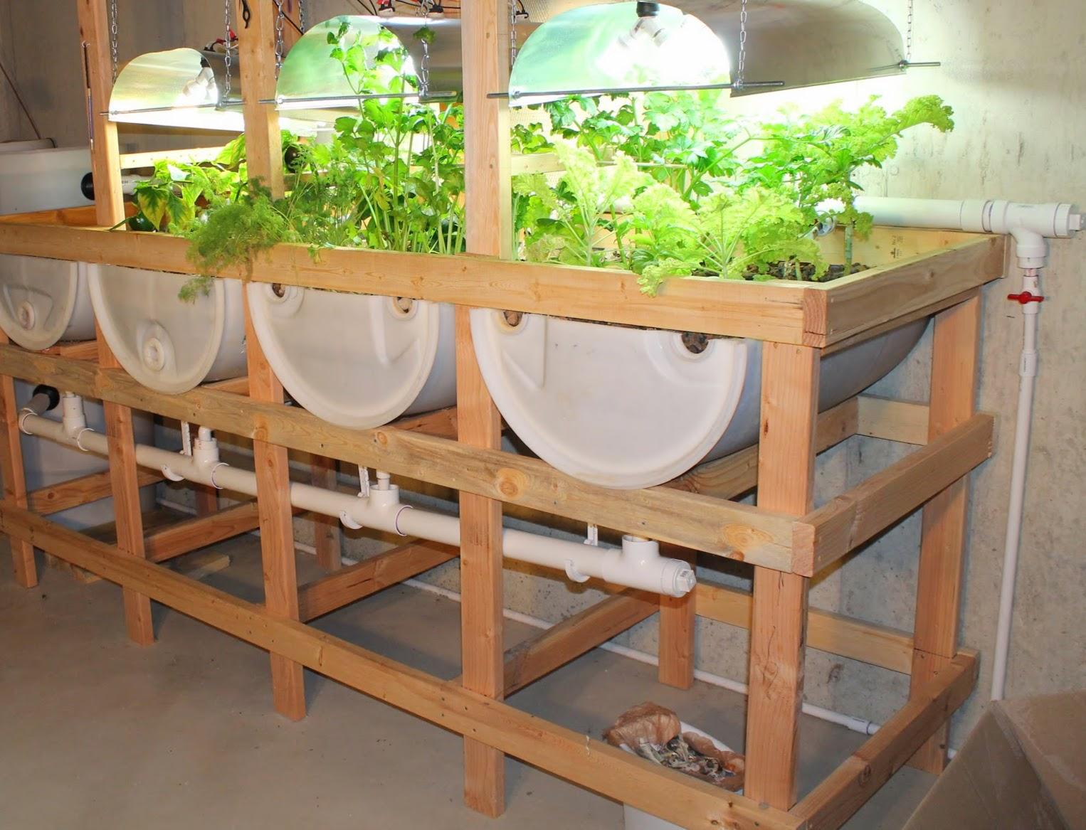 Suburban Aquaponics Benefits Of Indoor And Outdoor