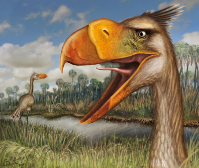 aves prehistoricas de Argentina Llallawavis