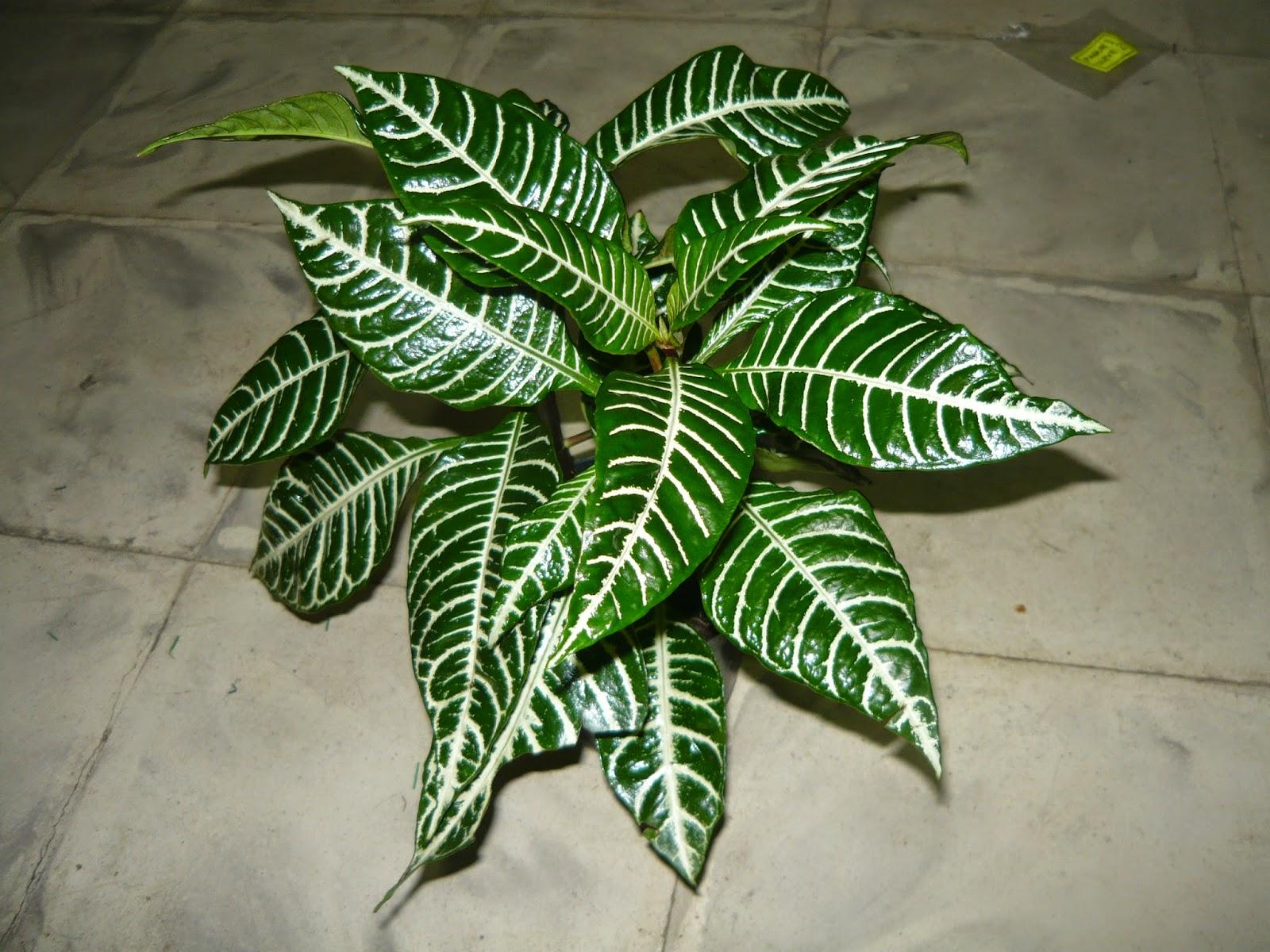 Vivero san francisco plantas ornamentales carrera 46b for Vivero mi planta