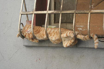 Cats Sleeping In Weird Positions
