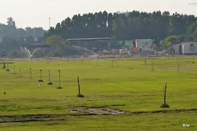 Grass Field @ Dubai Pivot Field