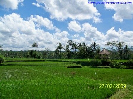 Que ver en Ubud: museos y paseos por los arrozales