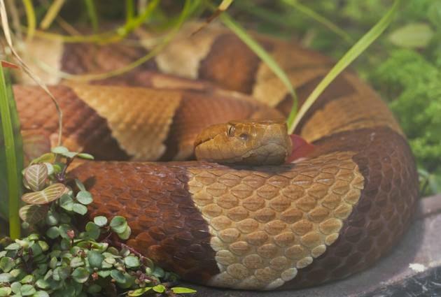 Serpientes asesinas