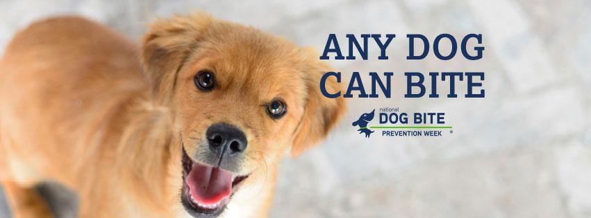 National Dog Bite Prevention Week
