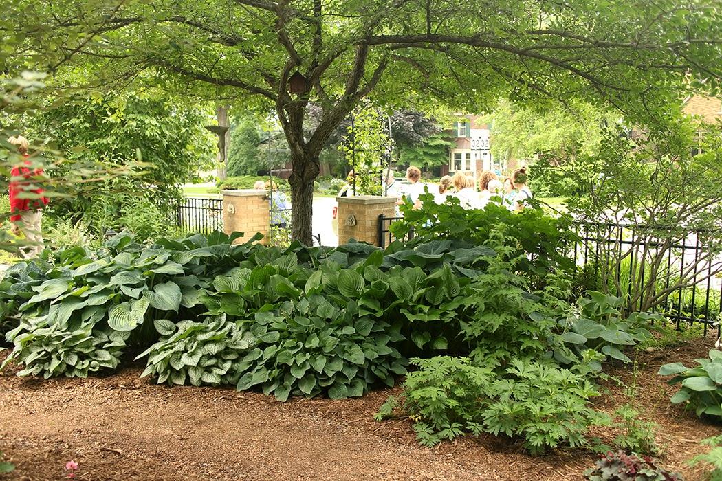 Garden tour - The Impatient Gardener