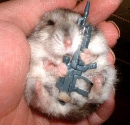 a hamster soldier drills