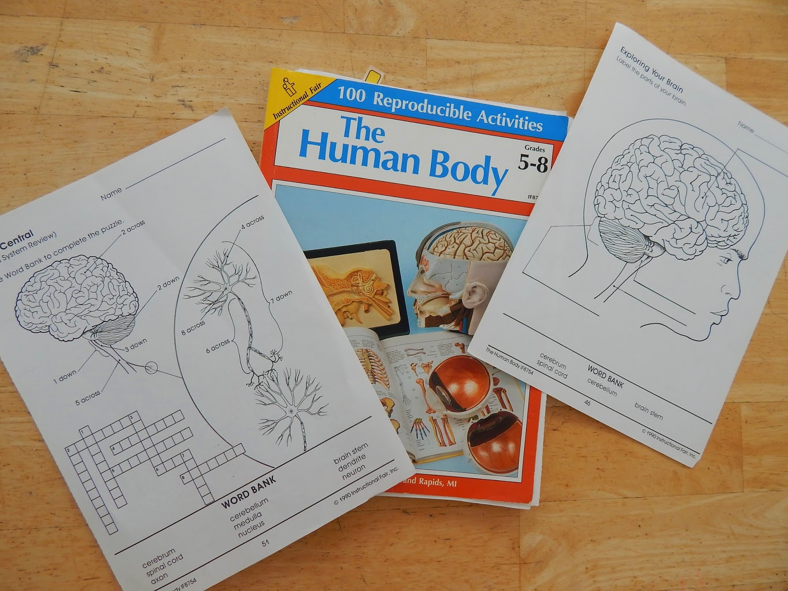 a study of the brain and the nervous system of the human body The human brain is the central organ of the human nervous system,  body the study of the anatomy of the brain  nervous system the adult human brain is.