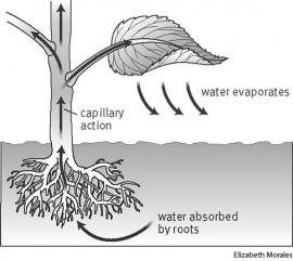 Tell Me Why: Why Do Plants Have Roots?