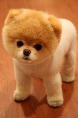 Cachorros, cachorrinhos e cachorrões em fotos - PostMania
