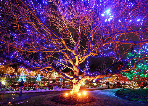 ... Vancouver Christmas Tradition: The Van Dusen Garden Festival of Lights