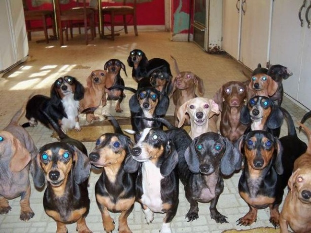 The Long and Short of it All: A Dachshund Dog News Magazine: 38 ...