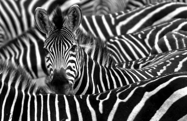 http://gestionclinicavarela.blogspot.com.es/2014/09/cazar-cebras-en-texas-o-porque-los.html