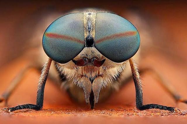 fotografias-artisticas-de-insectos