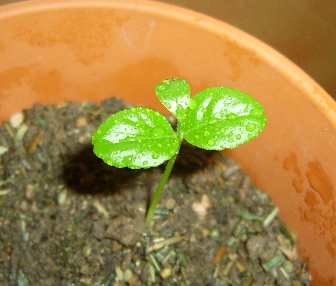 le jardin une passion qui pousse en moi comme une graine de plante germe dans un pot en terre. Black Bedroom Furniture Sets. Home Design Ideas