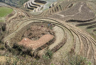 Farming on the terraced fields in China becomes less risky with insurance. (Credit: David Woo, courtesy of Flickr) Click to enlarge.