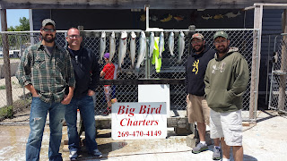 pacific salmon, atlantic salmon, lake michigan salmon, fishing charters michigan