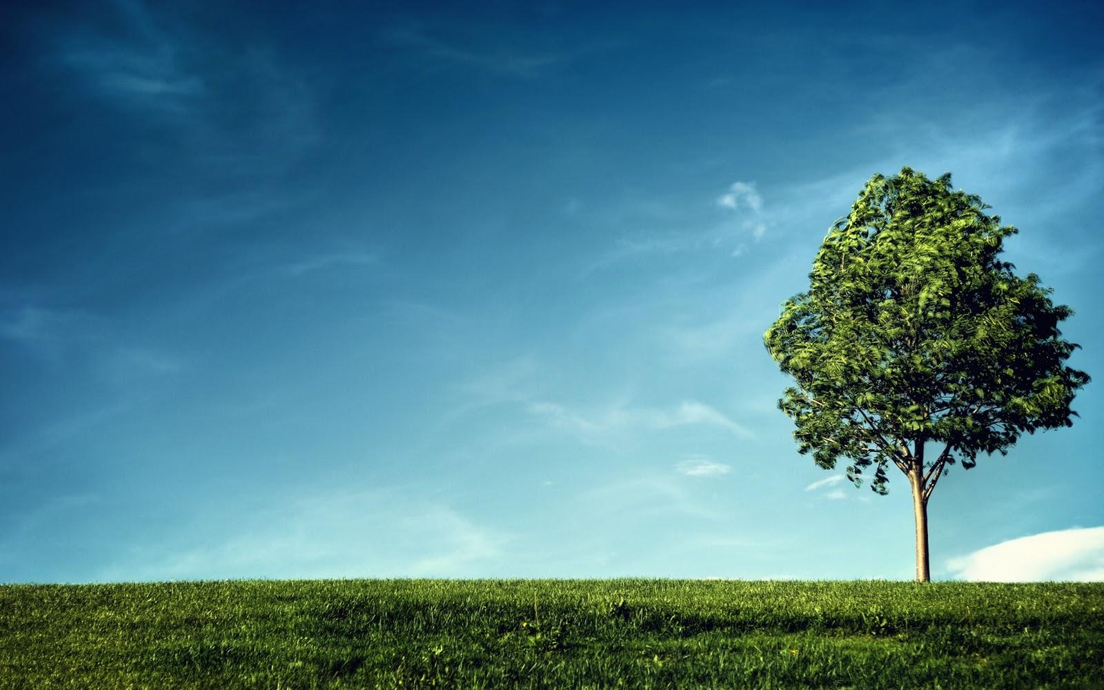 http://2.bp.blogspot.com/-uqGcKSCJtqc/TyQG2mo7dzI/AAAAAAAAAMQ/twt0E4qNBOo/s1600/Single+tree+wallpaper.jpg