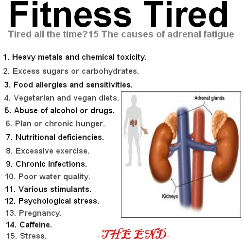 Adrenal Gland: Tired All The Time? 15 The Causes Of