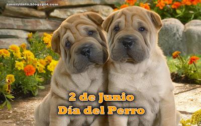 perros bulldogs cachorros