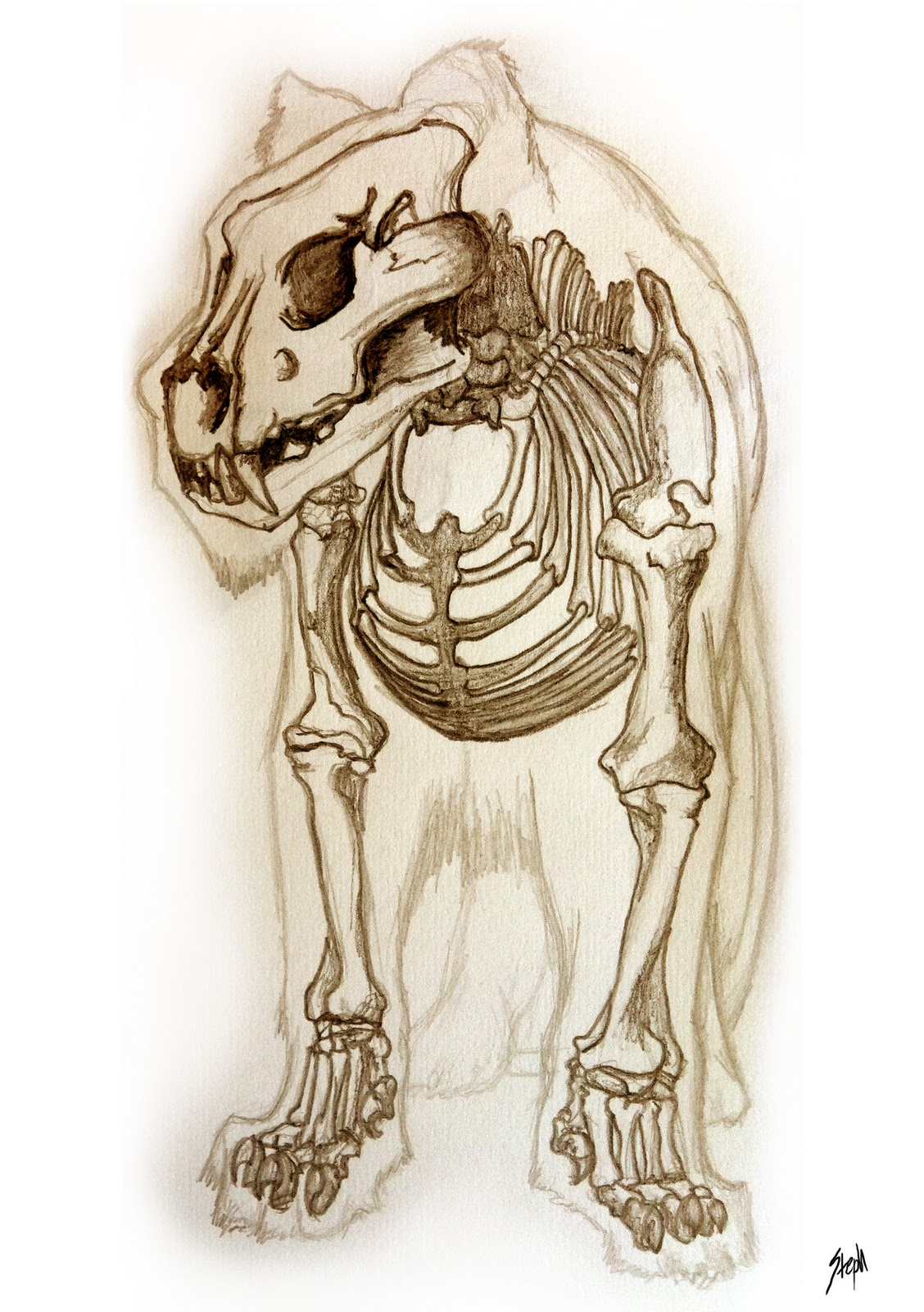 Steph\'s Creature Gallery: Lion Anatomy...