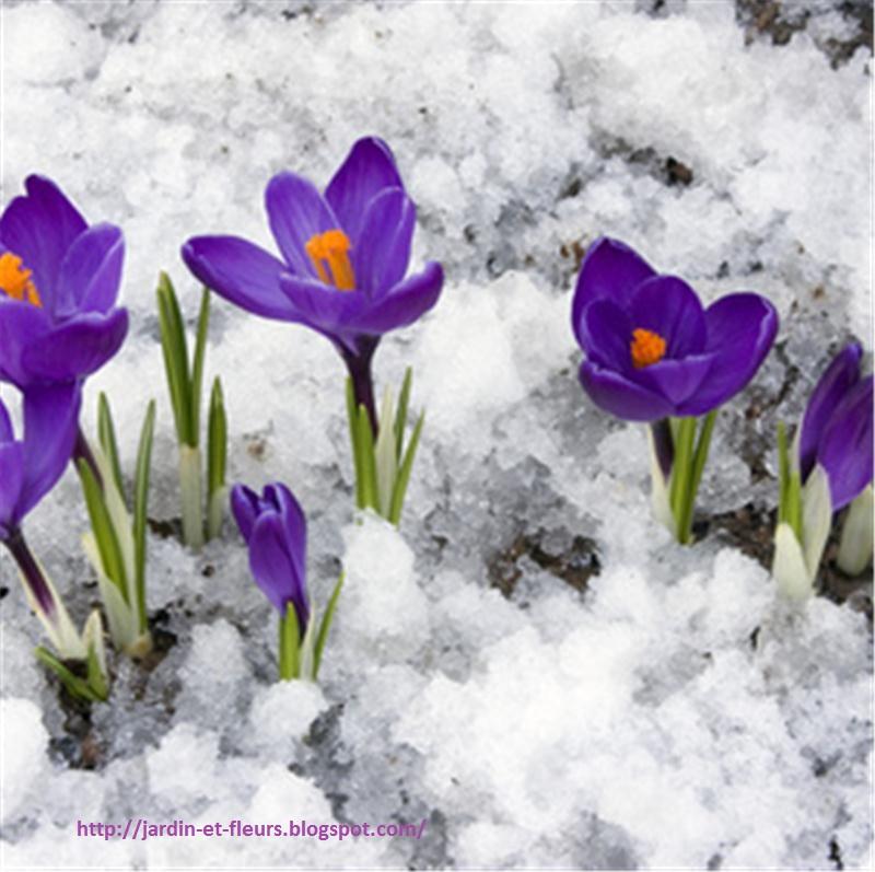 Grands plantes pour l\'automne et hiver couleur ~ Jardin et Fleurs