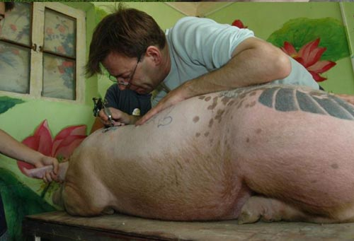 babi ada tattoo