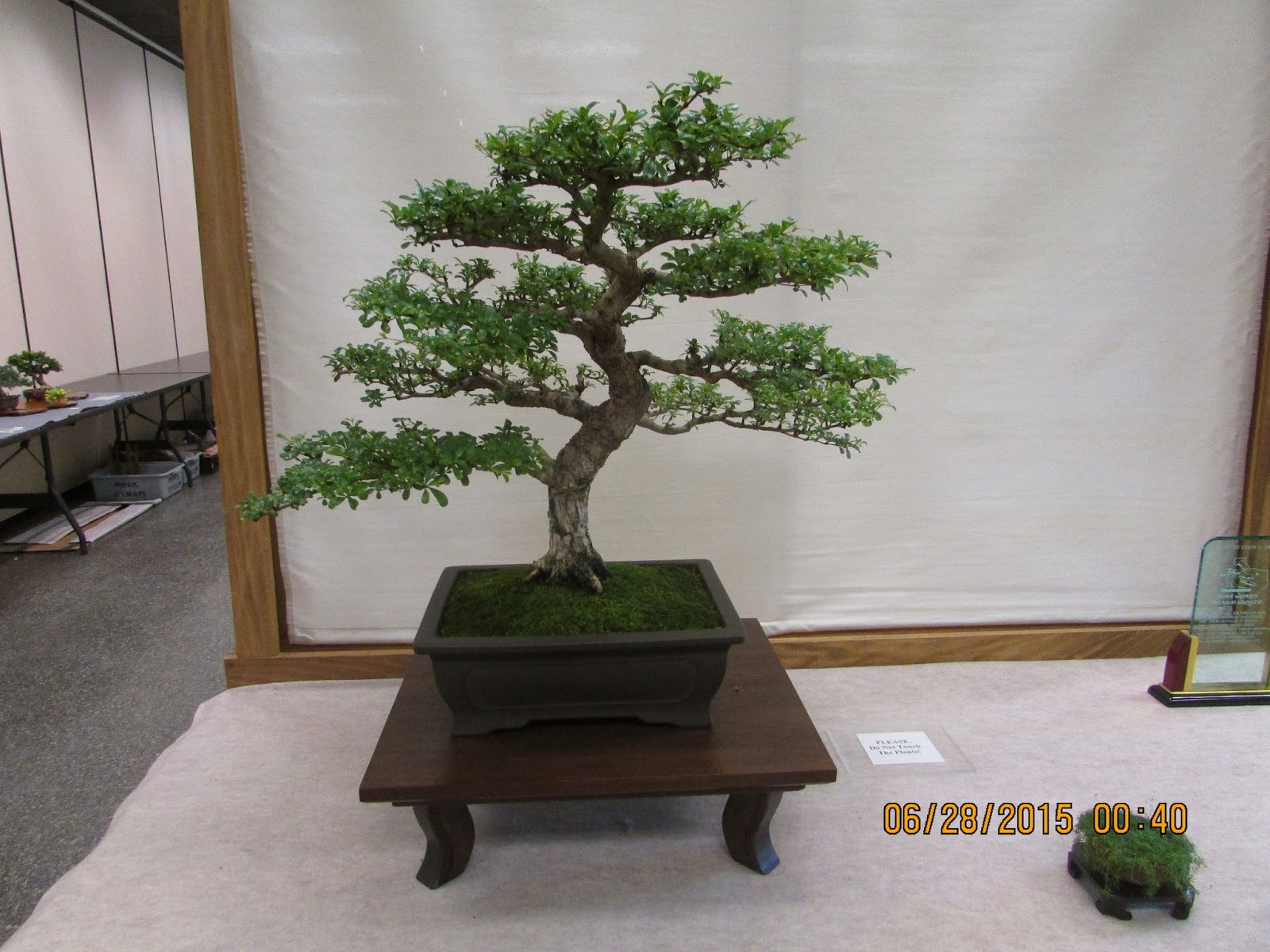 Bent Tree Bonsai