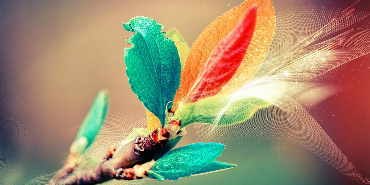 leaves 300+ Muhteşem HD Twitter Kapak Fotoğrafları
