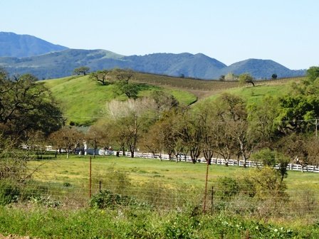 Santa Ynez Valley Winery Guided Tours