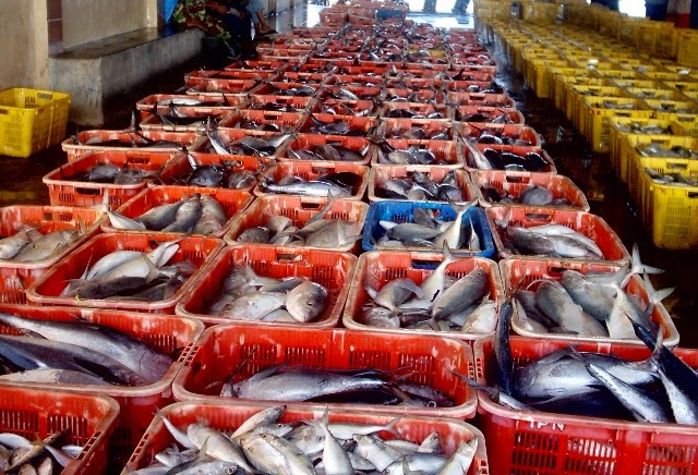 ikan indonesia