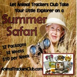 Take your child on a Backyard Safari