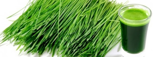 Healed by wheatgrass: 74-year-old man with cancer told he would be 'dead in a matter of weeks' proves doctors wrong  Wheatgrass_juice