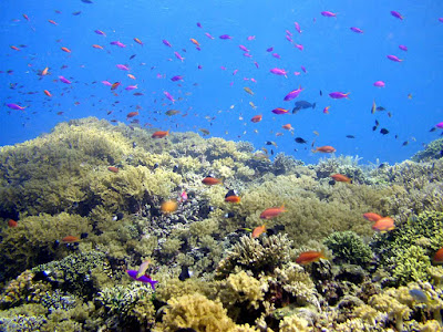 Bunaken Amazing underwater View