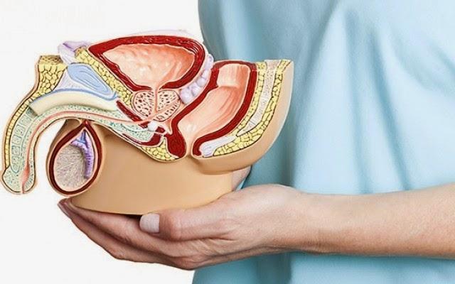 Kegel Exercise Helps Overcome Premature Ejaculation